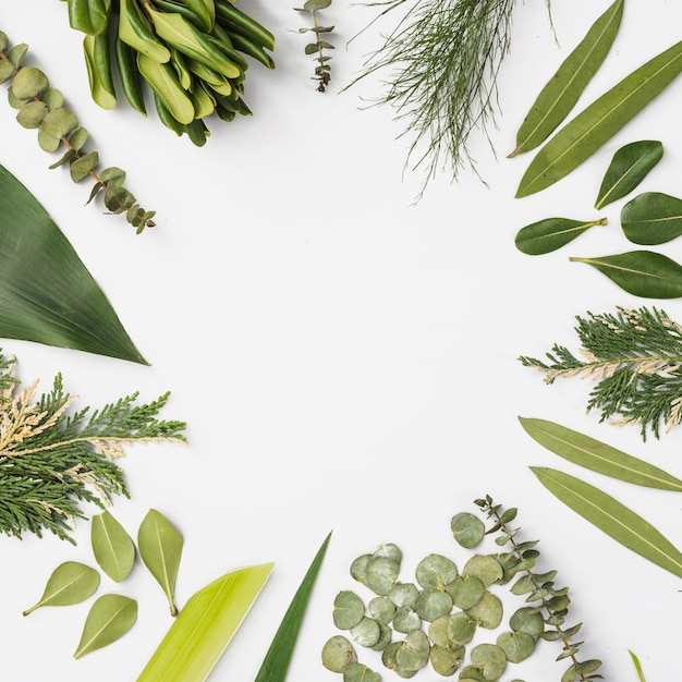 様々な植物の葉からの境界 無料写真
