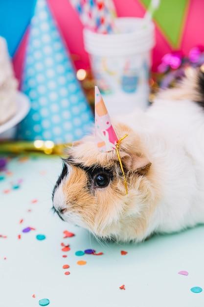 紙吹雪と青い背景に座っている小さなパーティー帽子をかぶっているモルモットのクローズアップ 無料写真
