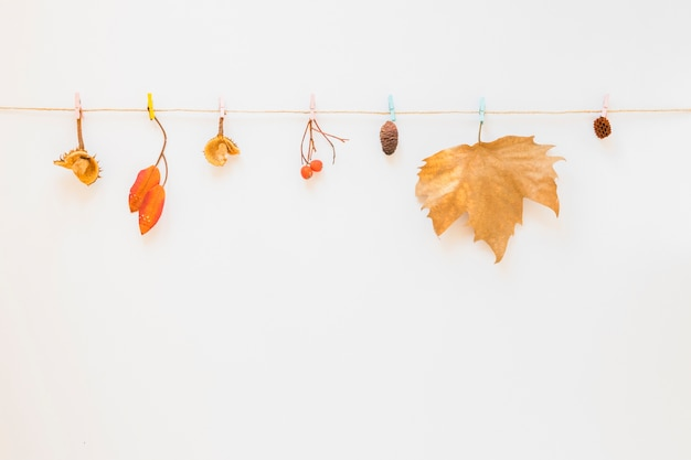 葉が紐に当たった 無料写真