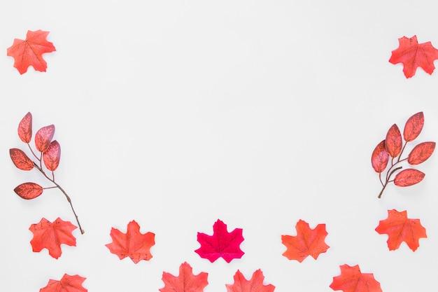 ホワイトボード上の葉 無料写真