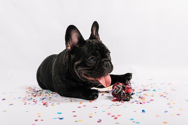 素敵なブルドッグ、パーティー要素でポーズをとる 無料写真