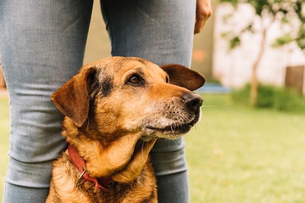 愛らしい犬が庭でポーズをとる 無料写真