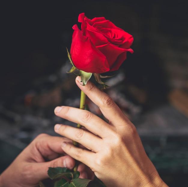 手に赤いバラ 無料写真
