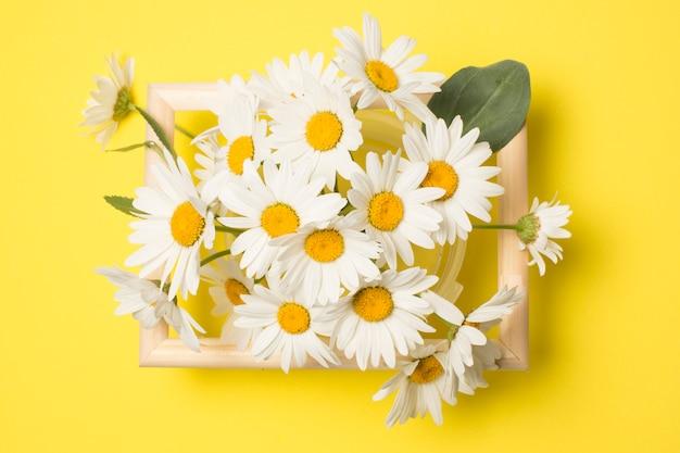 Композиция из свежих красивых цветов ромашки между рамкой Бесплатные Фотографии