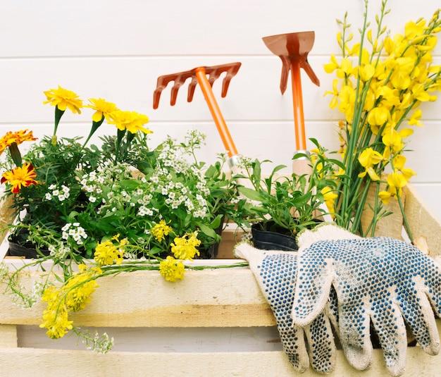 黄色い花と木の箱の庭の機器 無料写真