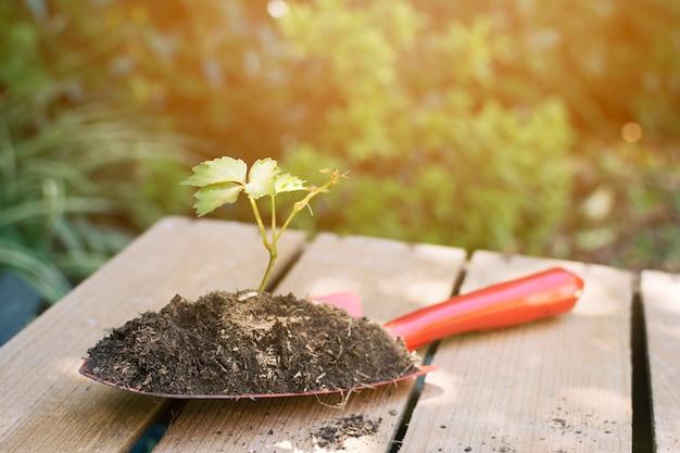 土と植物が配置されたスペード 無料写真