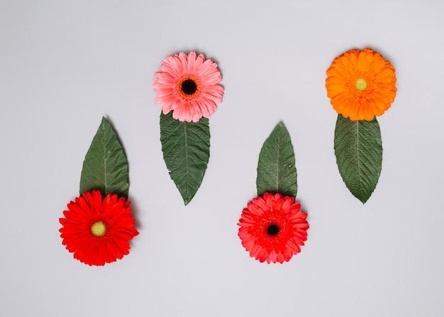 テーブルの上の緑の葉と明るい花芽 無料写真