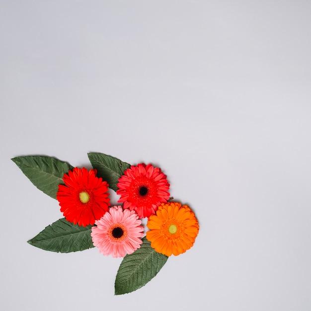 色とりどりの花がテーブルの上の葉を芽します。 無料写真