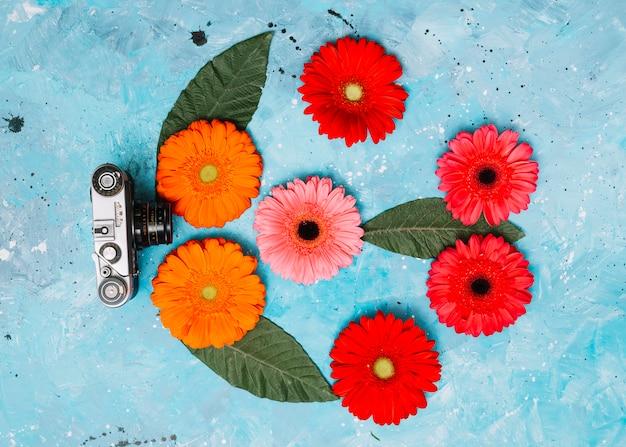 Яркие цветы герберы с камерой на столе Бесплатные Фотографии