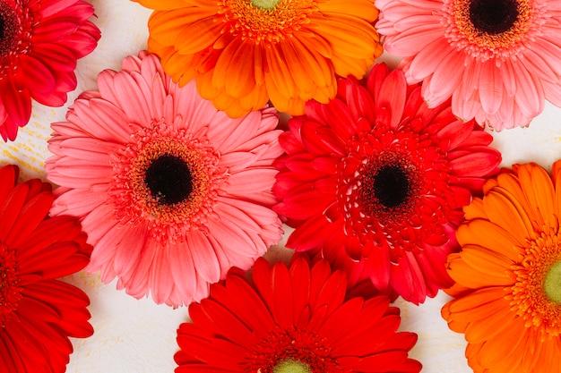 白いテーブルに多くのガーベラの花 無料写真