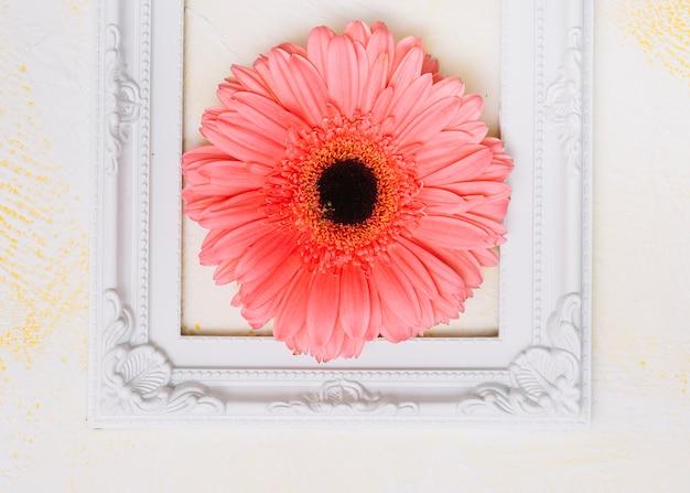 Розовый цветок герберы в рамке на столе Бесплатные Фотографии