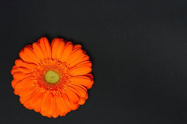 Оранжевый цветок герберы на темном столе Бесплатные Фотографии