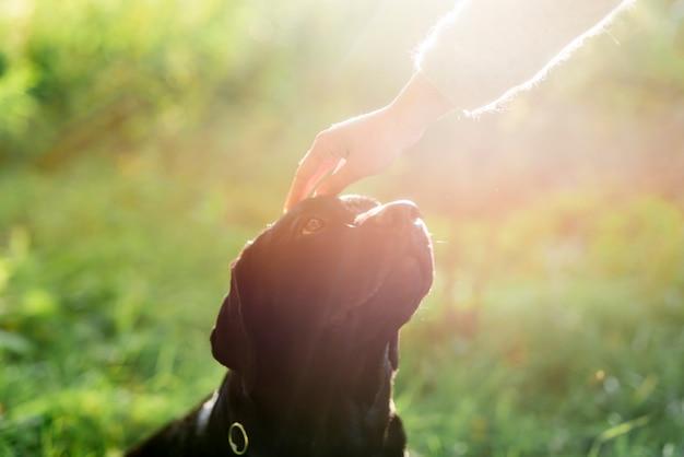 Рука владельца гладит ее собаку по голове в солнечном свете Бесплатные Фотографии