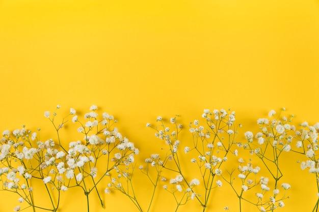 黄色の背景に白の赤ちゃん息の花 無料写真