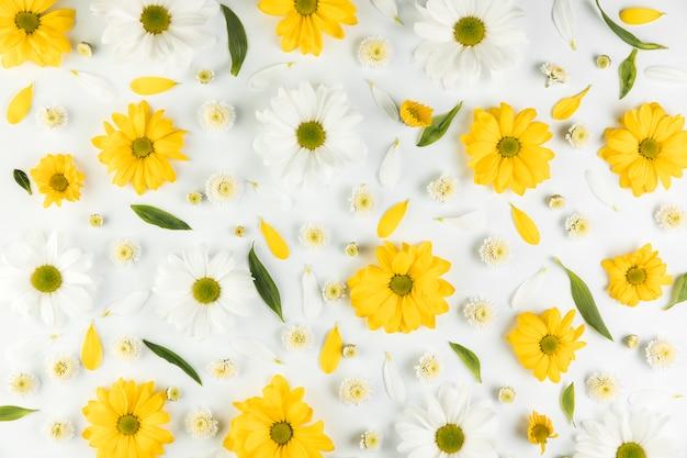 Бесшовный фон из цветов хризантемы и ромашки на белом фоне Бесплатные Фотографии