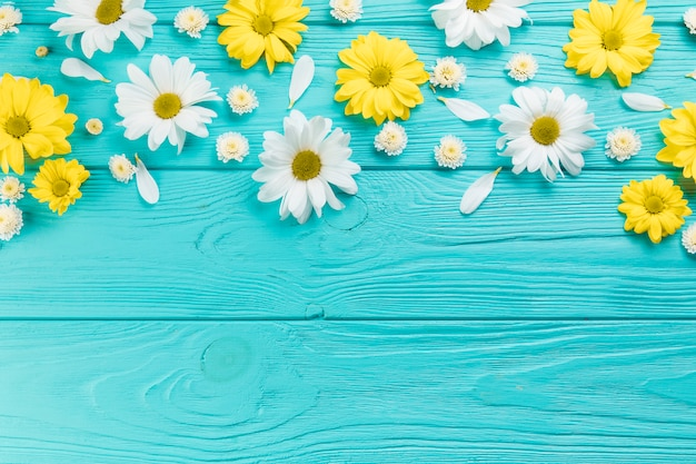 Желтые и белые цветы хризантемы и ромашки на бирюзовой деревянной поверхности Бесплатные Фотографии