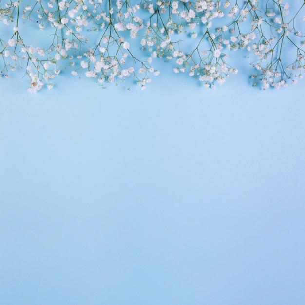 青の背景に白の赤ちゃんの息の花で作られた上枠 無料写真