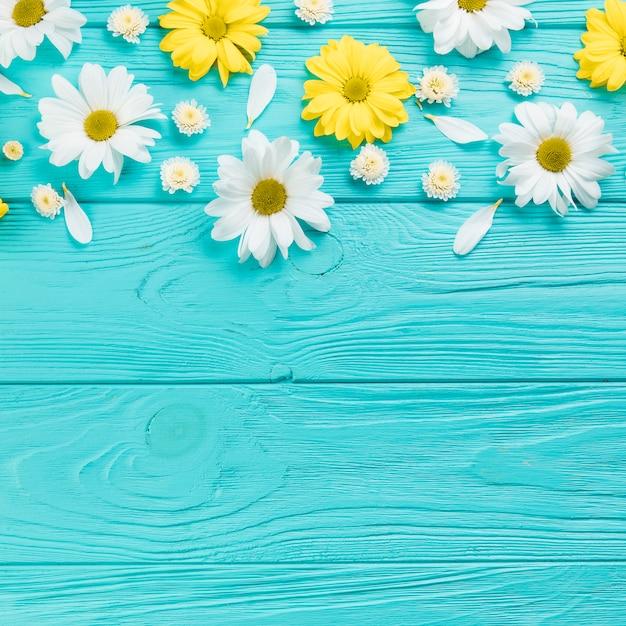 ターコイズブルーの木の板にカモミールと菊の花 無料写真