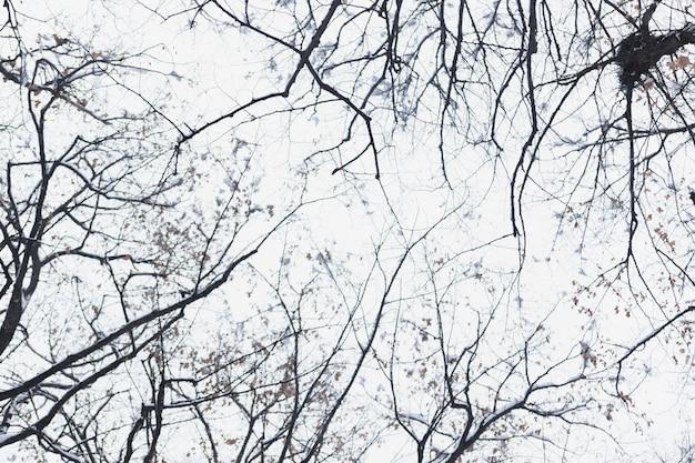 冬の日の低角度のビューシルエット裸木の枝 無料写真