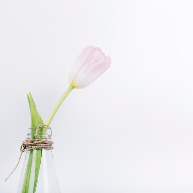 白い背景の上の透明な花瓶に新鮮な咲くチューリップの花 無料写真