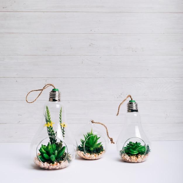 白い机の上の電球をぶら下げガラスの中の多肉植物のセット 無料写真