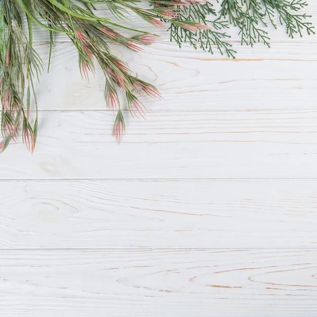 木製のテーブルの上の緑の植物の枝 無料写真