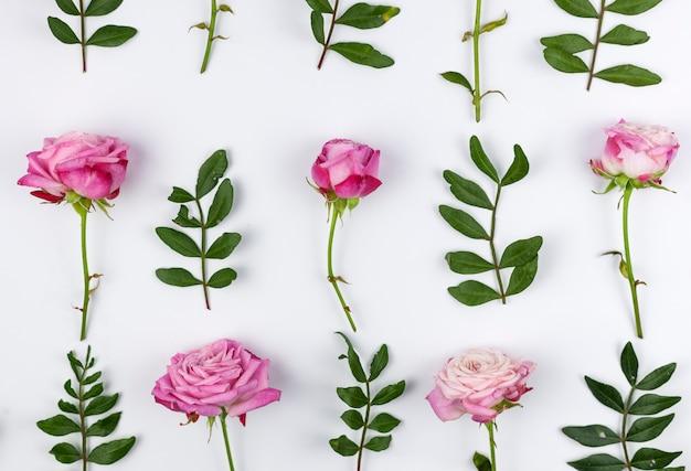 緑の葉と白い背景の上に配置されたピンクのバラ 無料写真