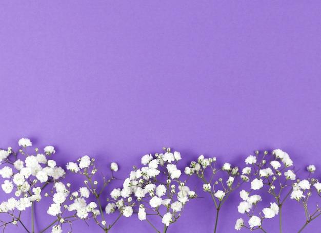紫色の背景の下に赤ちゃんの息の花 無料写真