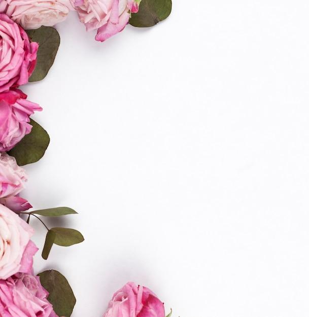 平らな面に繊細なピンクのバラ 無料写真