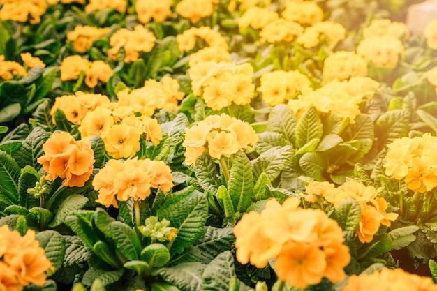 黄色い花を持つ自然な夏の背景 無料写真