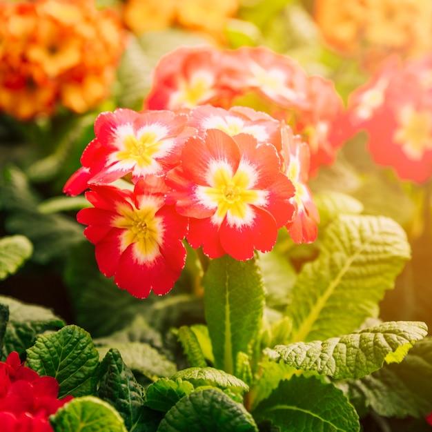 日光の下でエキゾチックな新鮮な赤と黄色の花 無料写真