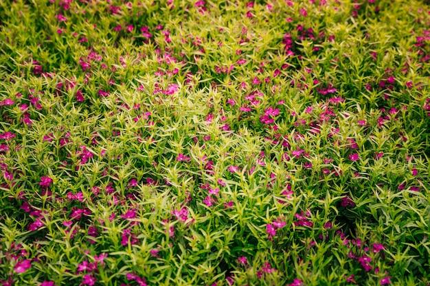 緑の葉とピンクの花の自然な背景 無料写真