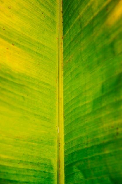 バナナの葉のマクロ 無料写真