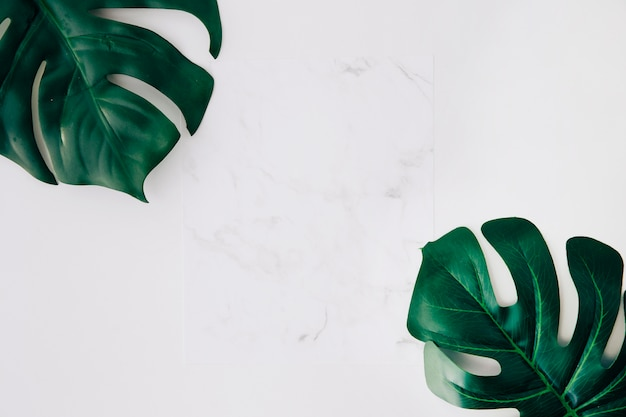 Чистая белая бумага и зеленые листья монстера на белом фоне Бесплатные Фотографии