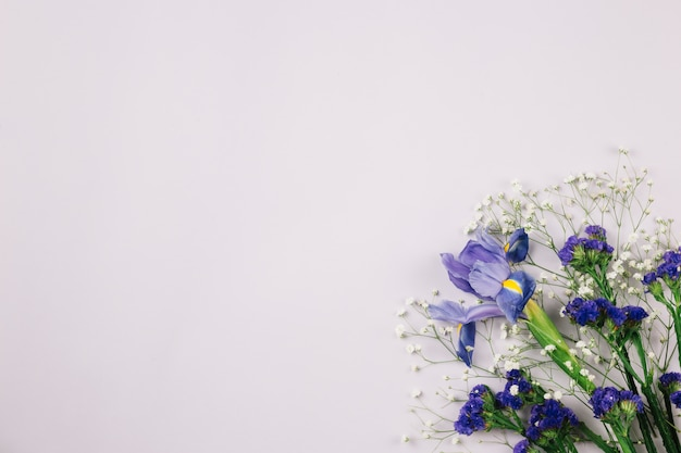 リモニウム。ジプソフィラ。と白い背景の上のアイリスの花 無料写真