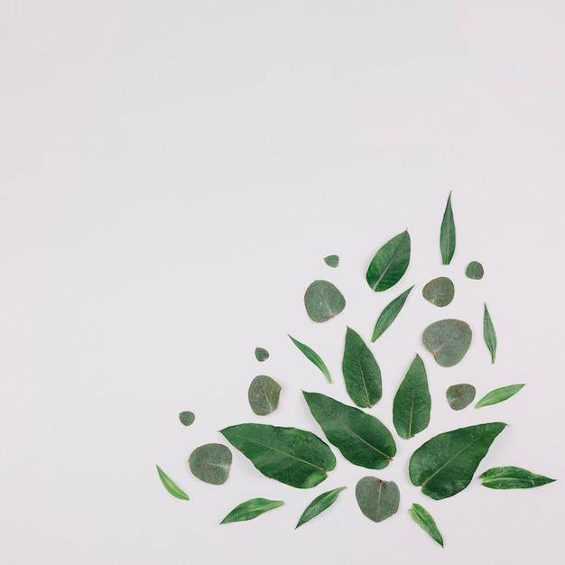 Дизайн выполнен с зелеными листьями на углу белого фона Бесплатные Фотографии