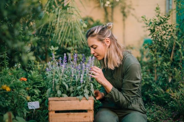金髪の若い女性が木枠にラベンダーの花の香り 無料写真