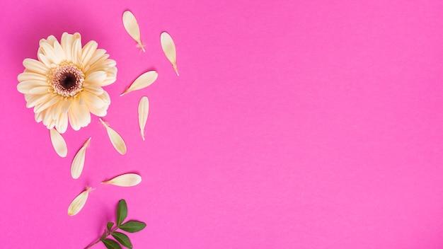 Цветок герберы с лепестками и веткой растения Бесплатные Фотографии