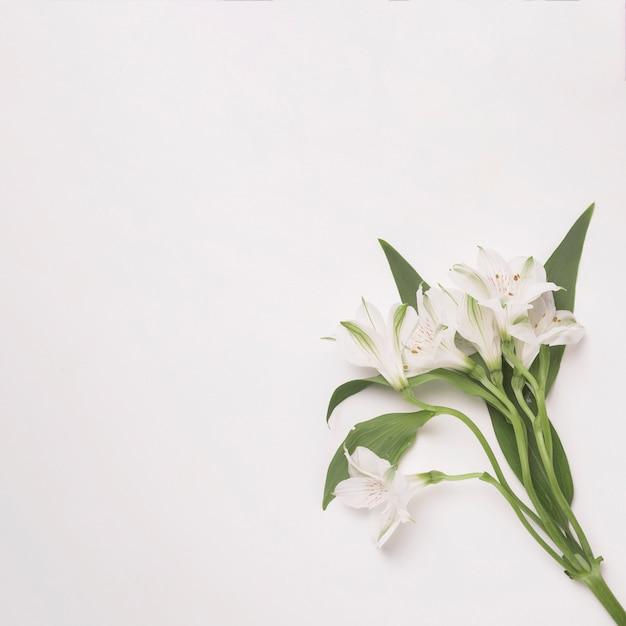 緑の葉が付いている茎の上に花の束 無料写真