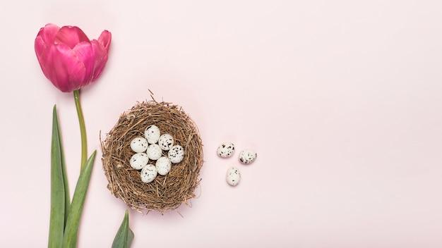 ウズラの卵とピンクのチューリップ 無料写真