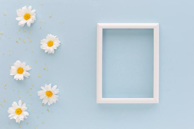 Белые цветы ромашки и пыльца возле пустой рамки на синем фоне Бесплатные Фотографии