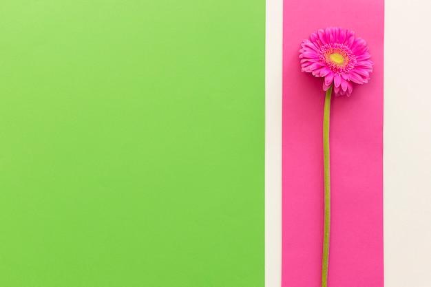 背景に単一のピンクのガーベラの立面図 無料写真