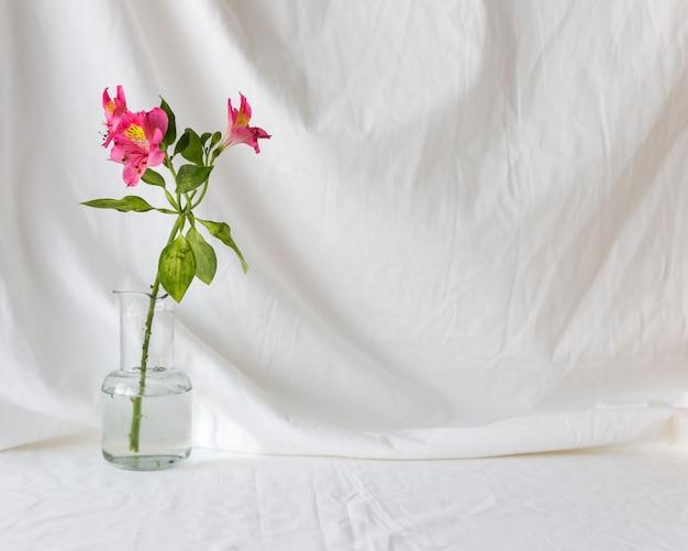 白いカーテンを背景に透明な花瓶にピンクのアルストロメリアの花 無料写真