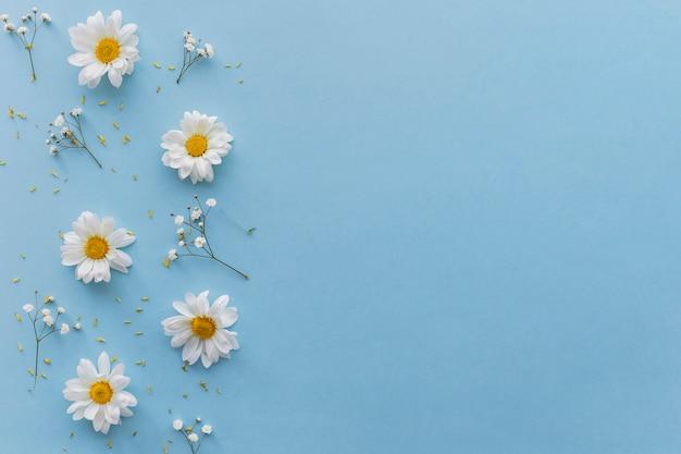 青い背景上の白い花の高角度のビュー 無料写真