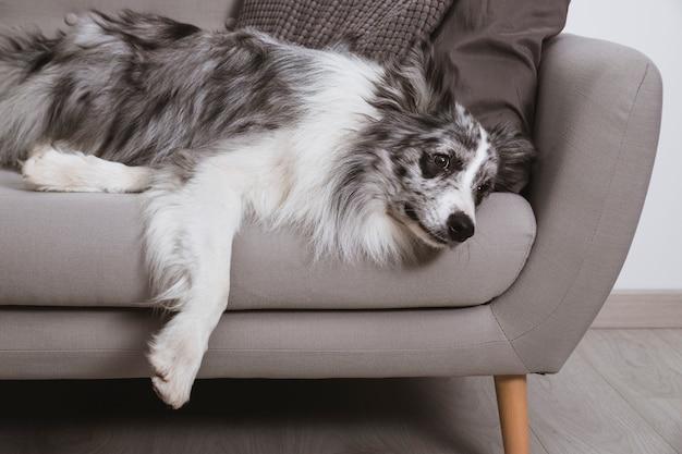 犬はソファでくつろいで 無料写真