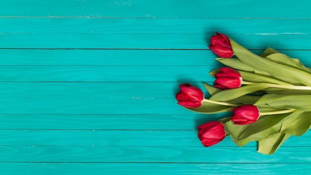 緑の背景に赤いチューリップの花 無料写真