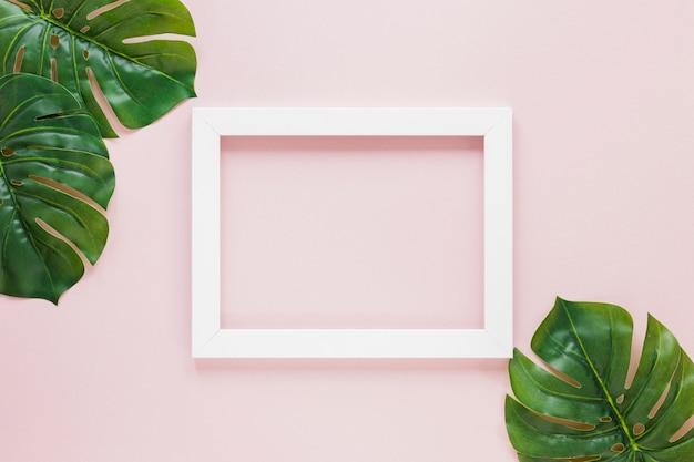 空白のフレームと緑のヤシの葉 無料写真