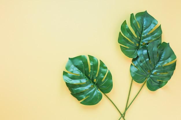 Три зеленых пальмовых листьев на желтом столе Бесплатные Фотографии