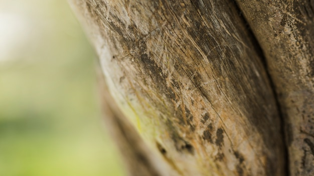 Деталь выстрел из ствола дерева Бесплатные Фотографии