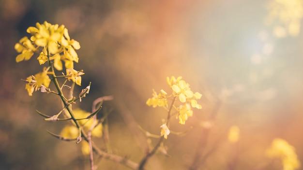 Желтое цветущее цветущее растение Бесплатные Фотографии